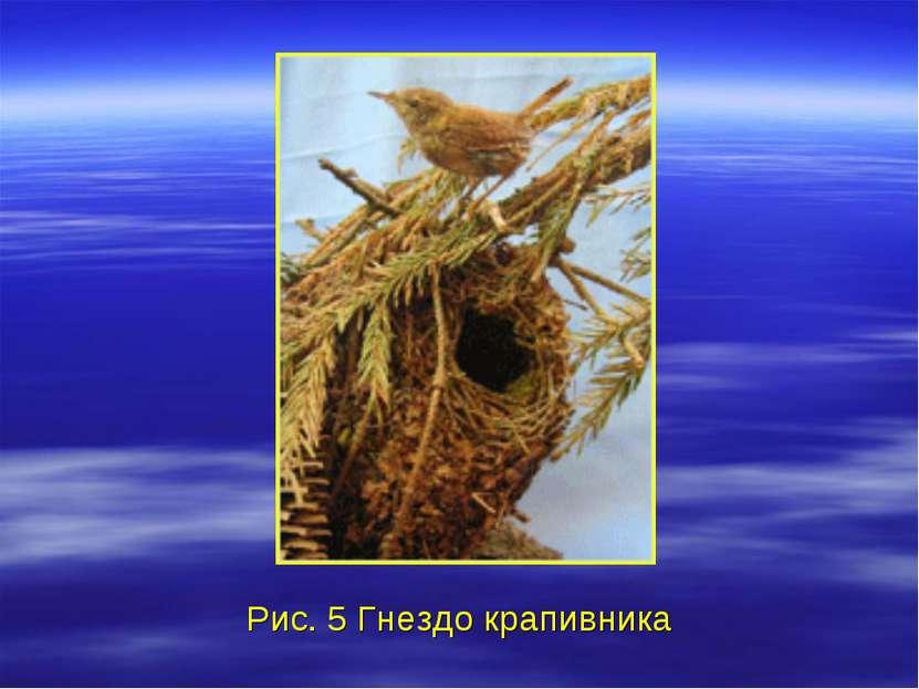 Рис. 5 Гнездо крапивника