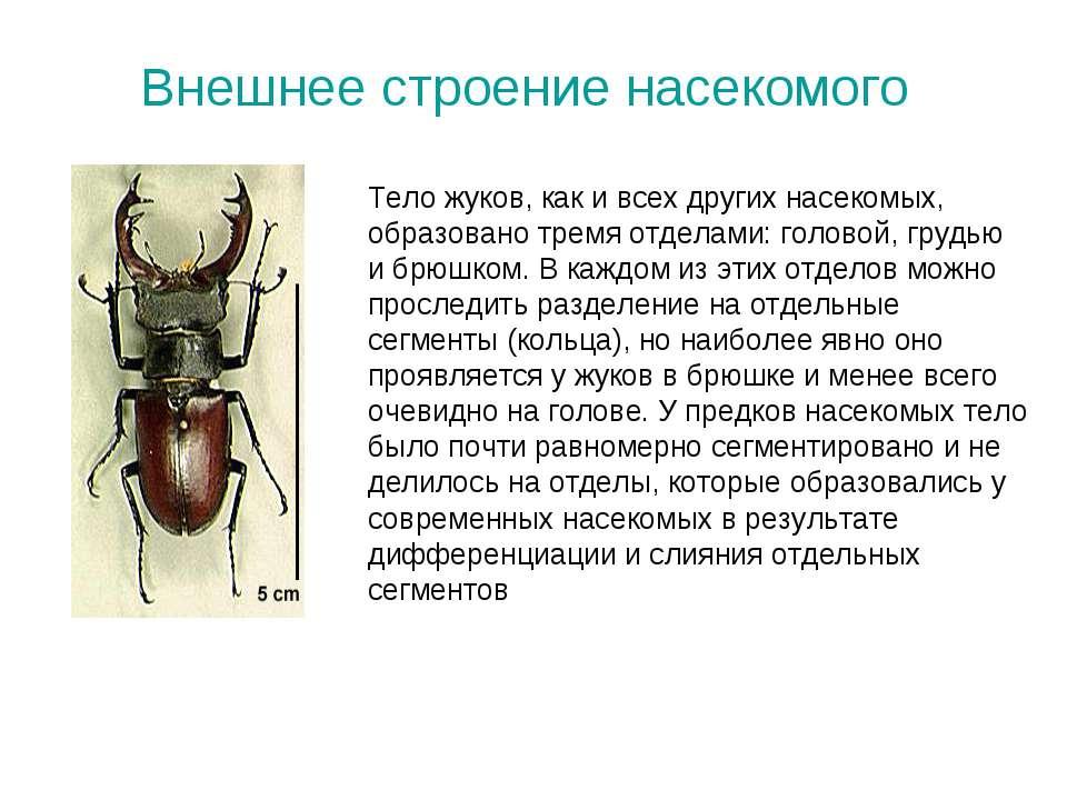Внешнее строение насекомого Тело жуков, как и всех других насекомых, образова...