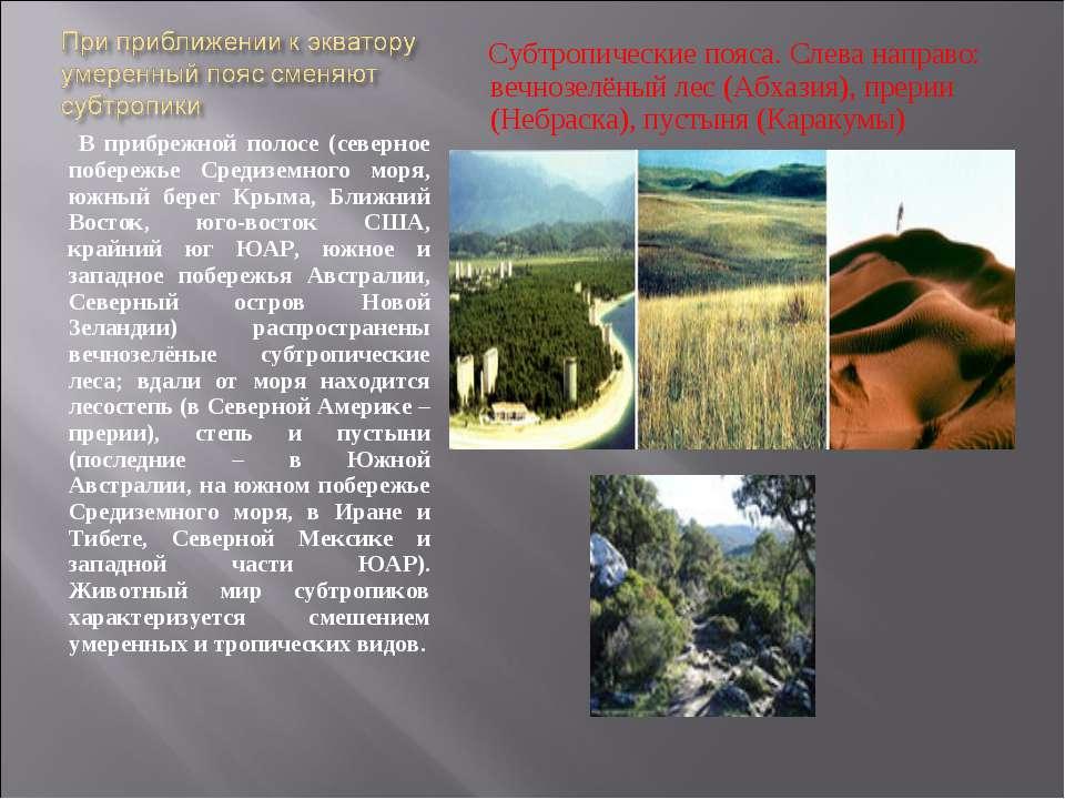 В прибрежной полосе (северное побережье Средиземного моря, южный берег Крыма,...