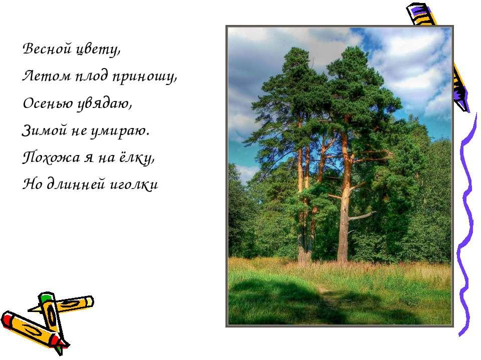 Весной цвету, Летом плод приношу, Осенью увядаю, Зимой не умираю. Похожа я на...