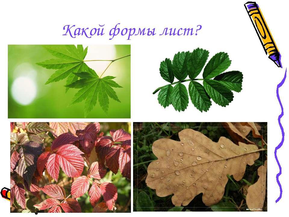 Какой формы лист?