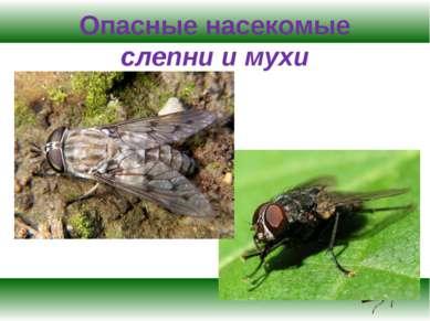Опасные насекомые слепни и мухи