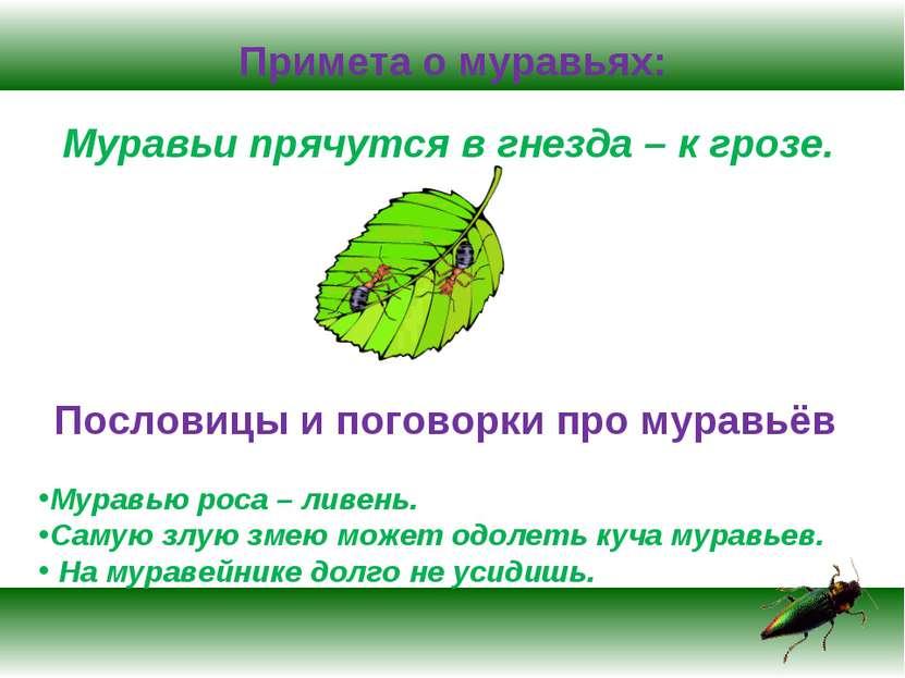 Примета о муравьях: Муравьи прячутся в гнезда – к грозе. Пословицы и поговорк...