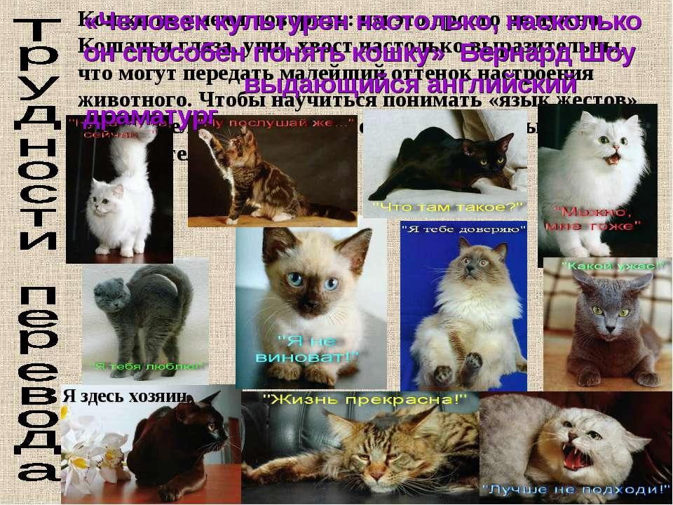 Кошки не умеют говорить: им это просто не нужно. Кошачьи глаза, уши, хвост на...