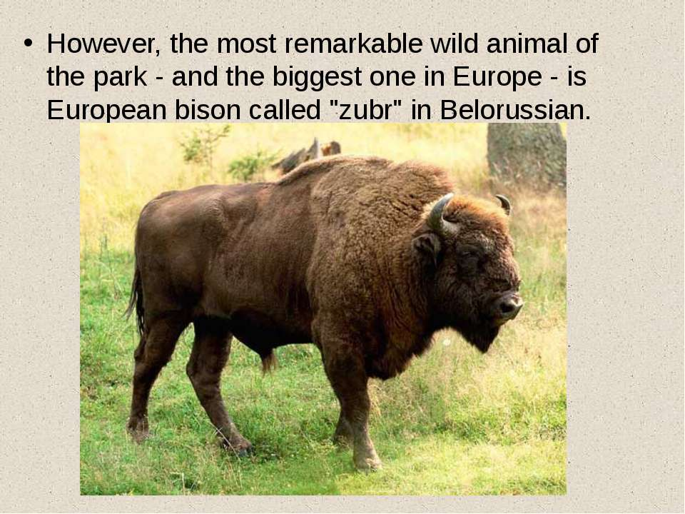 However, the most remarkable wild animal of the park - and the biggest one in...