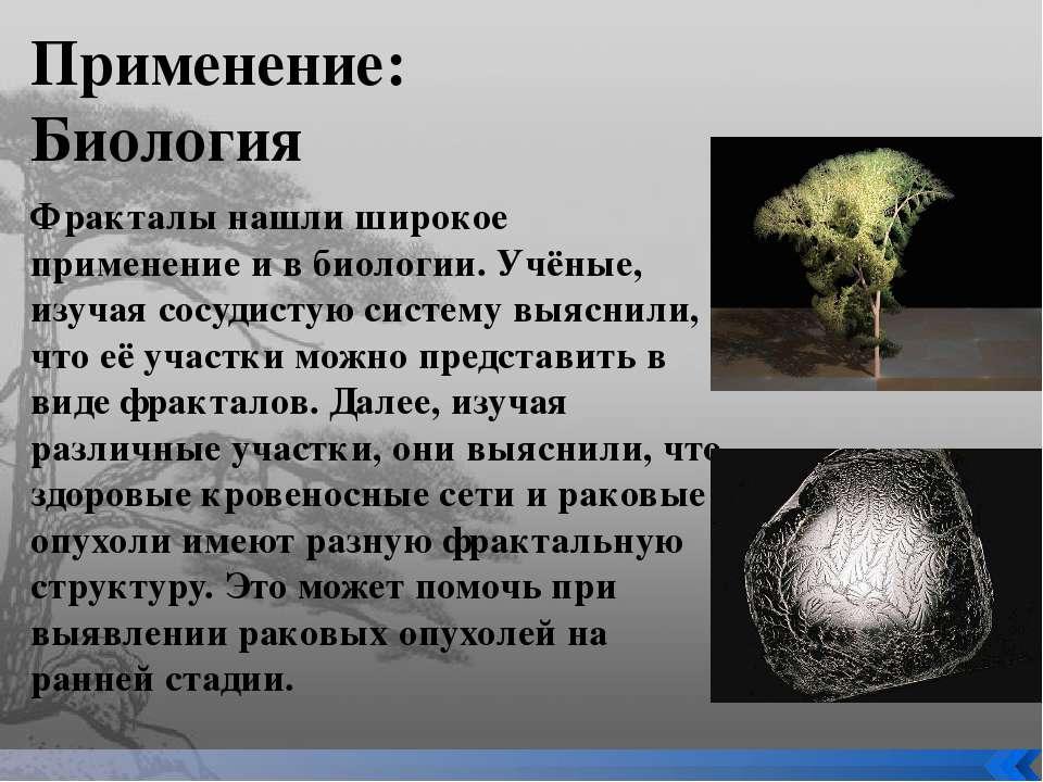 Применение: Биология Фракталы нашли широкое применение и в биологии. Учёные, ...