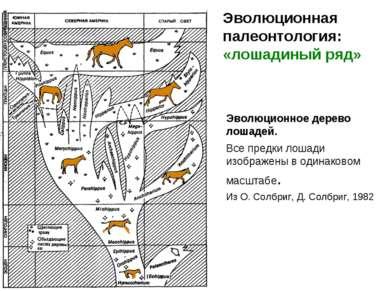 Эволюционное дерево лошадей. Все предки лошади изображены в одинаковом масшта...