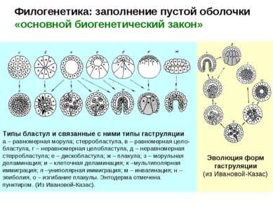 Филогенетика: заполнение пустой оболочки «основной биогенетический закон» Эво...