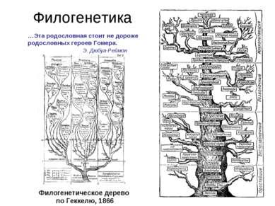 Филогенетика Филогенетическое дерево по Геккелю, 1866 …Эта родословная стоит ...