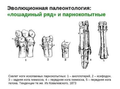 Эволюционная палеонтология: «лошадиный ряд» и парнокопытные Скелет ноги ископ...