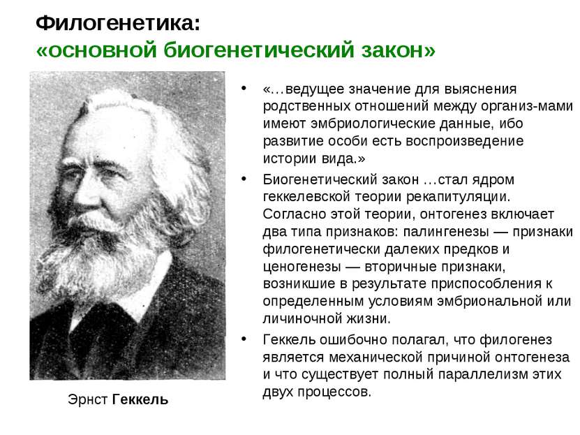 Филогенетика: «основной биогенетический закон» Эрнст Геккель «…ведущее значен...