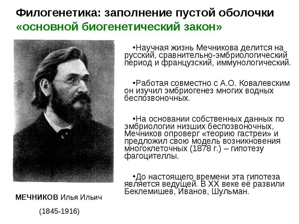 Научная жизнь Мечникова делится на русский, сравнительно-эмбриологический пер...