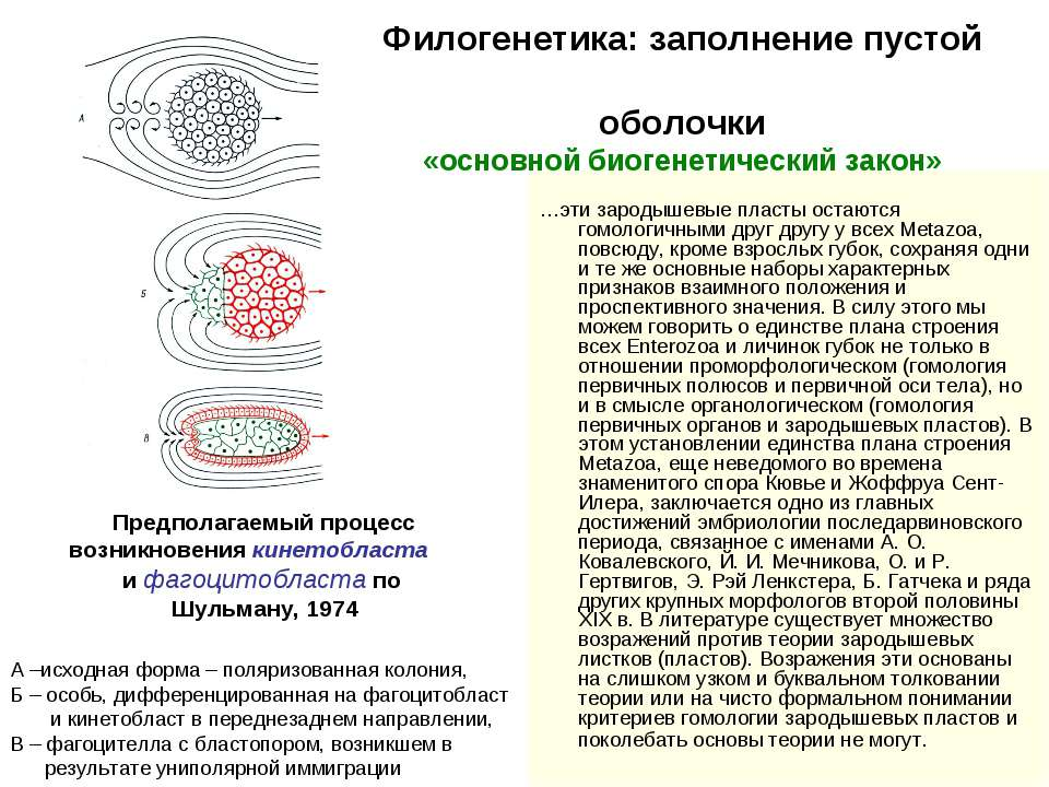 Филогенетика: заполнение пустой оболочки «основной биогенетический закон» …эт...