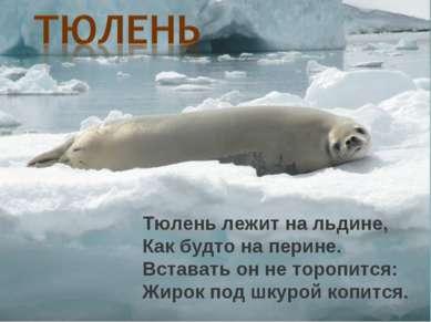 Тюлень лежит на льдине, Как будто на перине. Вставать он не торопится: Жирок ...