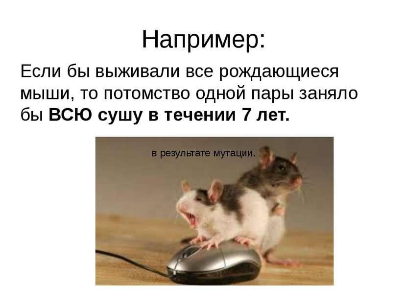 Например: Если бы выживали все рождающиеся мыши, то потомство одной пары заня...