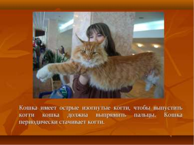 Кошка имеет острые изогнутые когти, чтобы выпустить когти кошка должна выпрям...