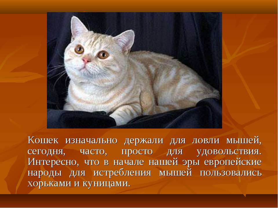 Кошек изначально держали для ловли мышей, сегодня, часто, просто для удовольс...