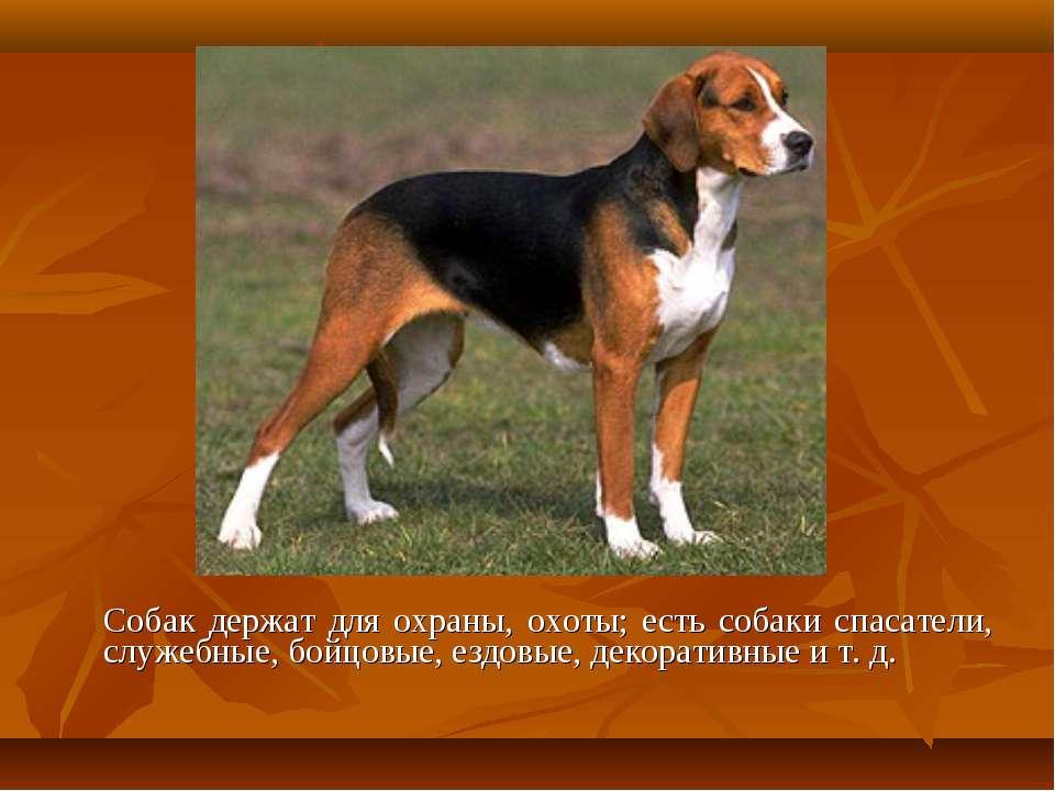Собак держат для охраны, охоты; есть собаки спасатели, служебные, бойцовые, е...