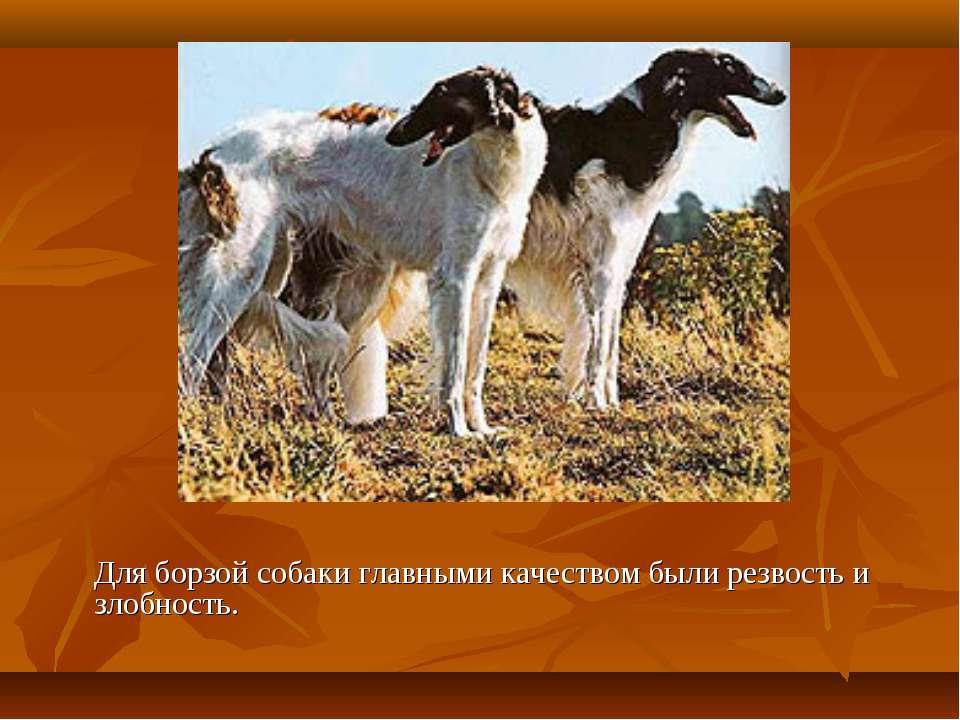 Для борзой собаки главными качеством были резвость и злобность.