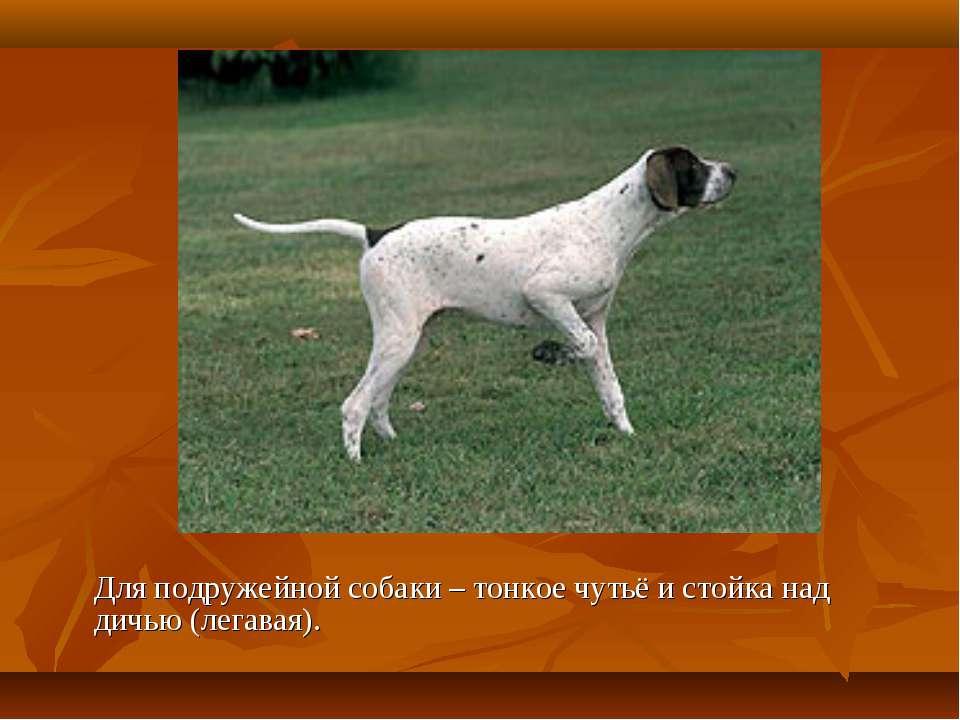 Для подружейной собаки – тонкое чутьё и стойка над дичью (легавая).