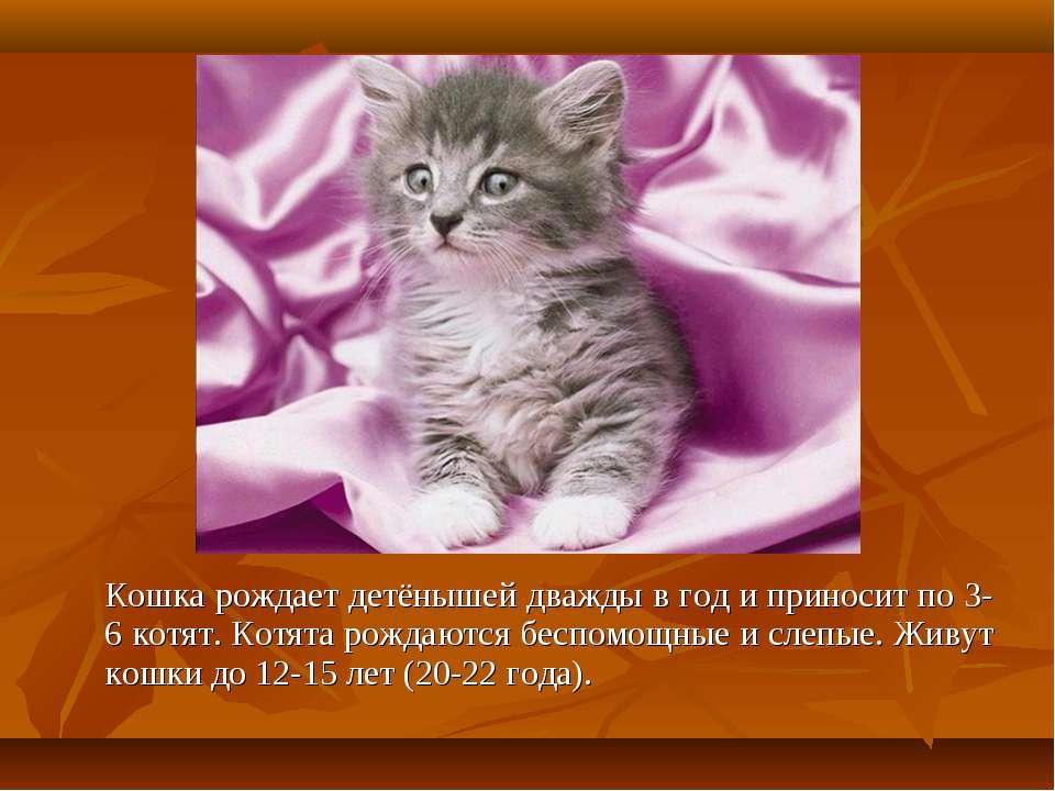 Кошка рождает детёнышей дважды в год и приносит по 3-6 котят. Котята рождаютс...