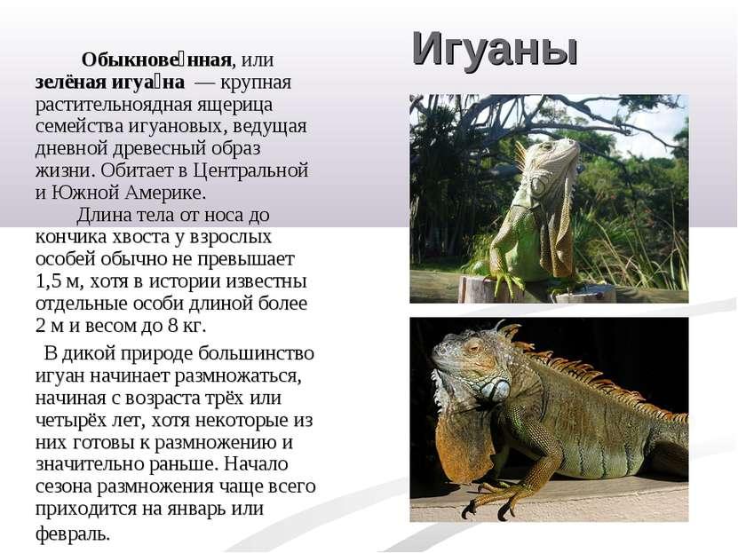 Игуаны Обыкнове нная, или зелёная игуа на — крупная растительноядная ящерица...