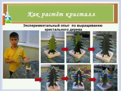 Как растёт кристалл Экспериментальный опыт по выращиванию кристального дерева