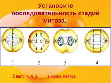 Установите последовательность стадий митоза. Ответ: 1, 4, 3. 2 –фаза мейоза.
