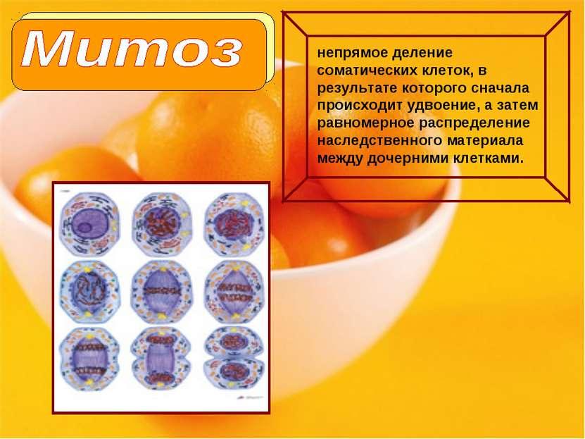 непрямое деление соматических клеток, в результате которого сначала происходи...