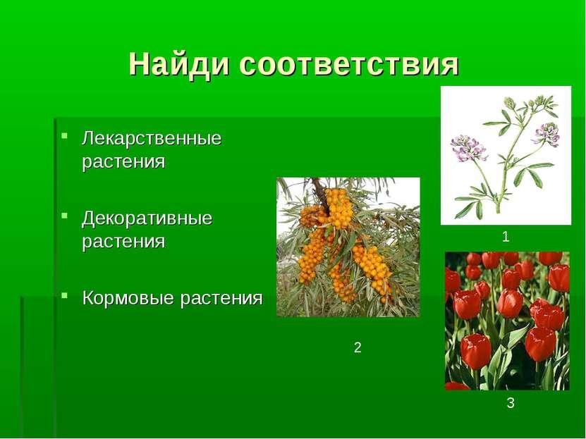 Найди соответствия Лекарственные растения Декоративные растения Кормовые раст...
