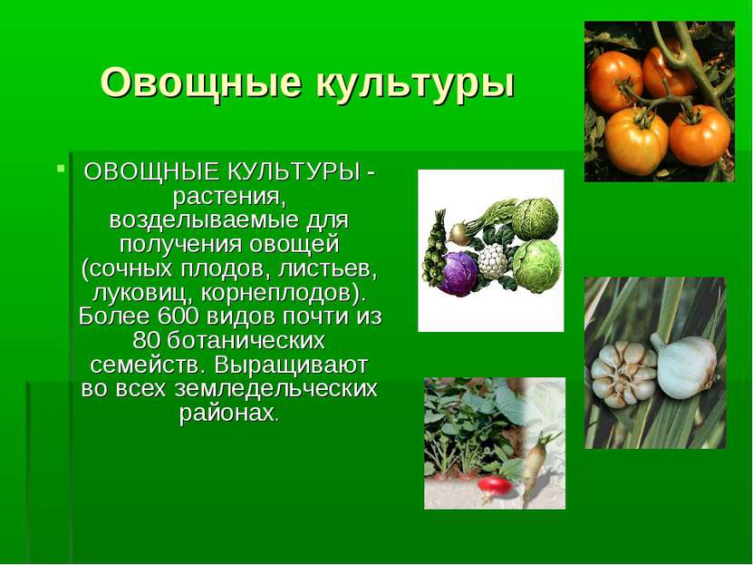 Овощные культуры ОВОЩНЫЕ КУЛЬТУРЫ - растения, возделываемые для получения ово...