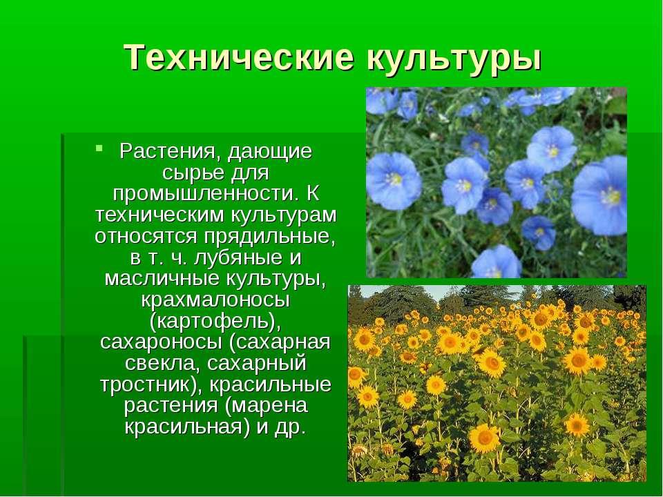 Технические культуры Растения, дающие сырье для промышленности. К техническим...