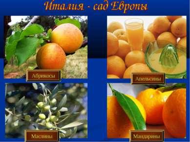 Абрикосы Апельсины Маслины Мандарины