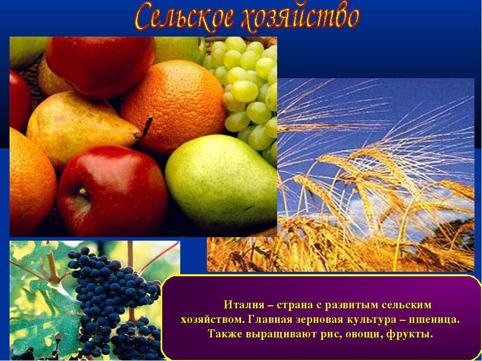 Италия – страна с развитым сельским хозяйством. Главная зерновая культура – п...