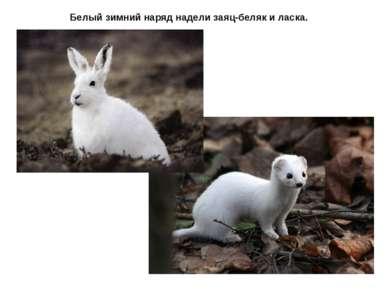 Белый зимний наряд надели заяц-беляк и ласка.