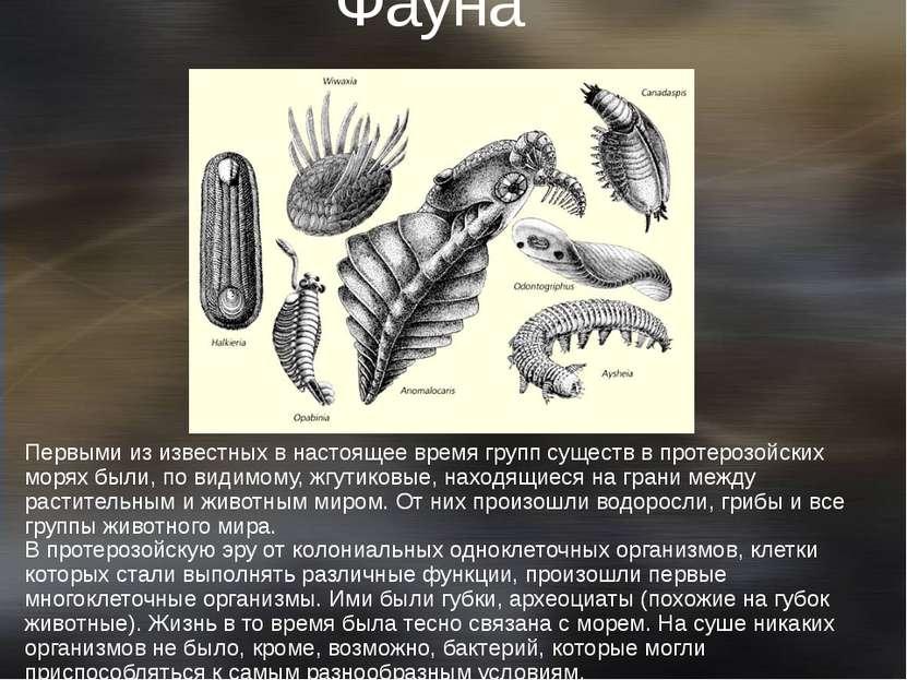 Фауна протерозоя Первыми из известных в настоящее время групп существ в проте...