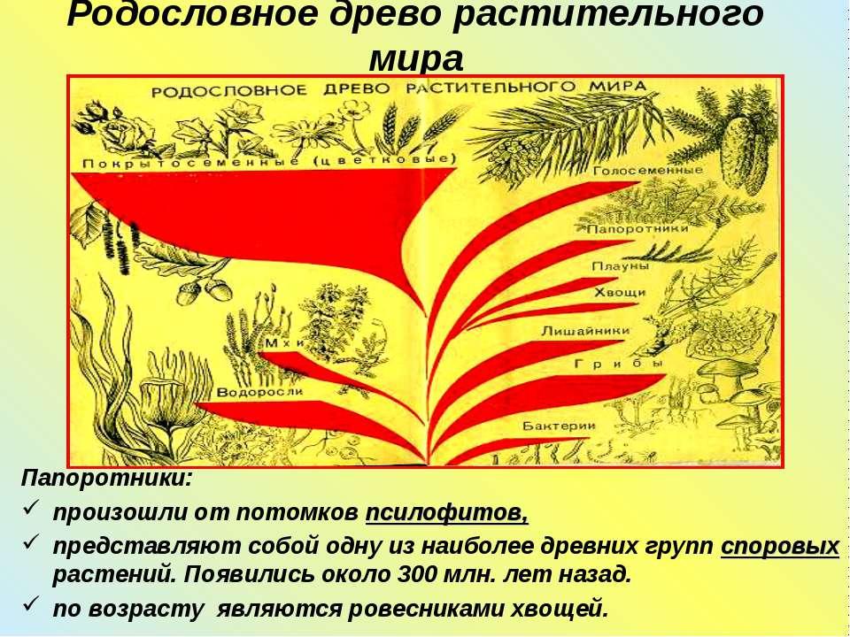 Родословное древо растительного мира Папоротники: произошли от потомков псило...