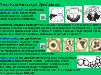 Билатеральный тип дробления (круглые черви, оболочники) характеризуется налич...