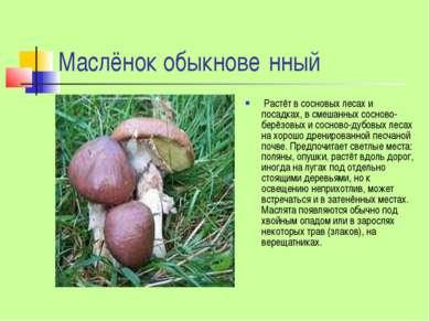 Маслёнок обыкнове нный Растёт в сосновых лесах и посадках, в смешанных соснов...