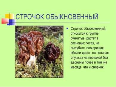 СТРОЧОК ОБЫКНОВЕННЫЙ Строчок обыкновенный, относится к группе сумчатые, расте...