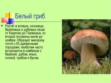 Белый гриб Растёт в еловых, сосновых, берёзовых и дубовых лесах от Карелии до...
