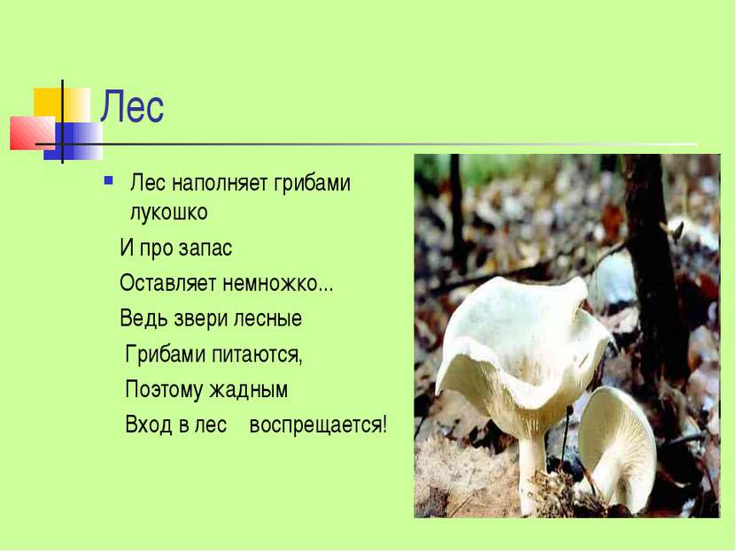 Лес Лес наполняет грибами лукошко И про запас Оставляет немножко... Ведь звер...