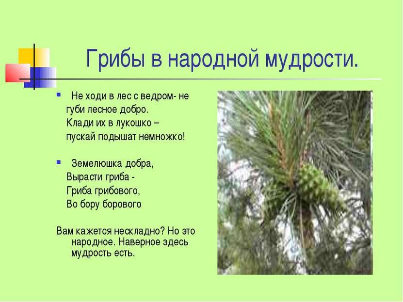 Грибы в народной мудрости. Не ходи в лес с ведром- не губи лесное добро. Клад...