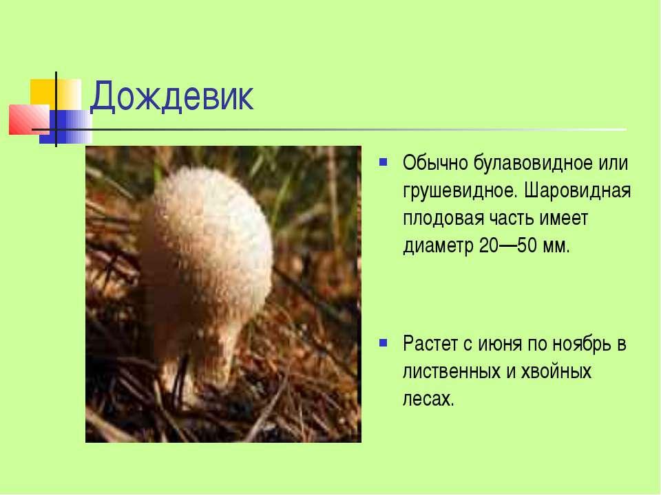 Дождевик Обычно булавовидное или грушевидное. Шаровидная плодовая часть имеет...