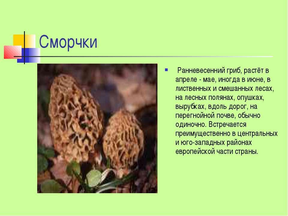 Сморчки Ранневесенний гриб, растёт в апреле - мае, иногда в июне, в лиственны...