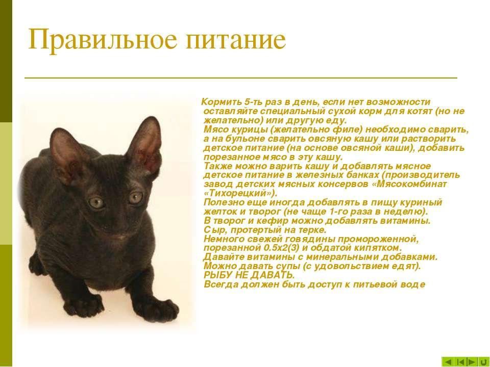 отчаянно можно ли 3 недельным котятам давать творог купить квартиру