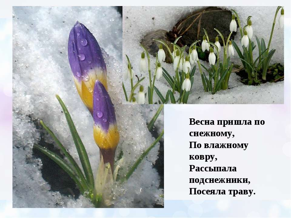 Весна пришла по снежному, По влажному ковру, Рассыпала подснежники, Посеяла т...