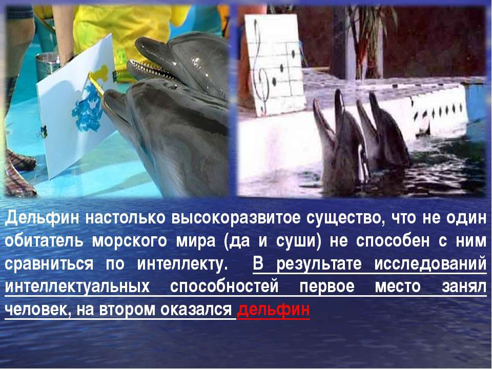 Дельфин настолько высокоразвитое существо, что не один обитатель морского мир...