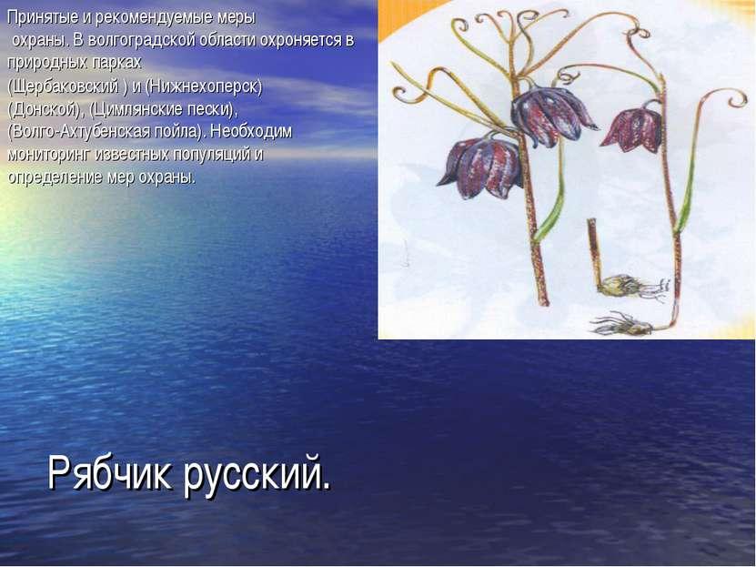 Рябчик русский. Принятые и рекомендуемые меры охраны. В волгоградской области...