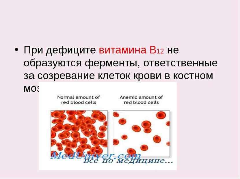 При дефиците витамина В12 не образуются ферменты, ответственные за созревание...